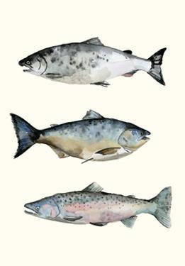 Fish Grouping 3 by Natasha Marie