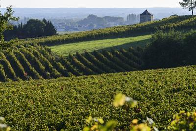 Vineyard, Chinon, Indre Et Loire, Centre, France, Europe by Nathalie Cuvelier