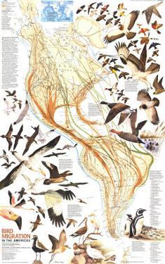 1979 Bird Migration in the Americas Map by National Geographic Maps