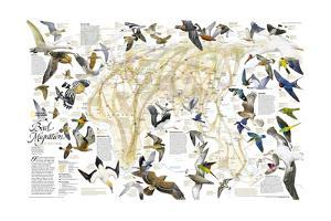2004 Bird Migration Eastern Hemisphere Map by National Geographic Maps