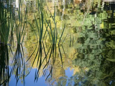 Trees and Grasses Reflected in a Pond in Grand Teton National Park