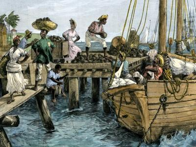 Natives Loading a Schooner with Coconuts at Kingston, Jamaica