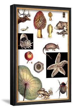 Nature's Curio II