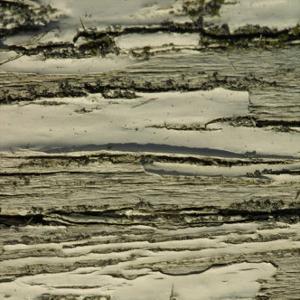 Nature's Textures VIII