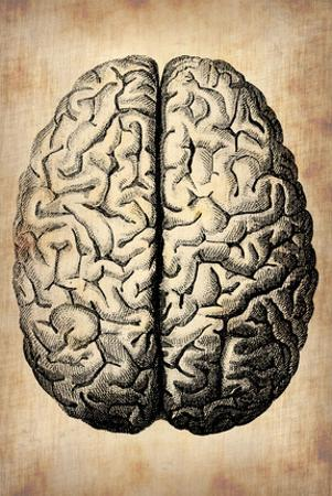 Vintage Brain by NaxArt