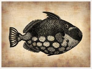 Vintage Fish by NaxArt