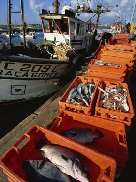 Fishing Boats Unloading, Sagres, Algarve, Portugal, Europe by Neale Clarke