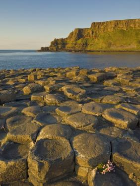 Giant's Causeway Near Bushmills, County Antrim, Ulster, Northern Ireland, UK by Neale Clarke
