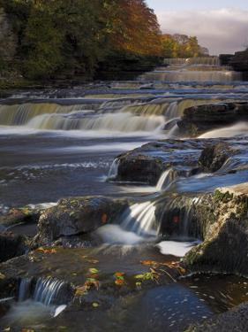 Lower Aysgarth Falls and Autumn Colours Near Hawes, Yorkshire Dales National Park, Yorkshire by Neale Clarke