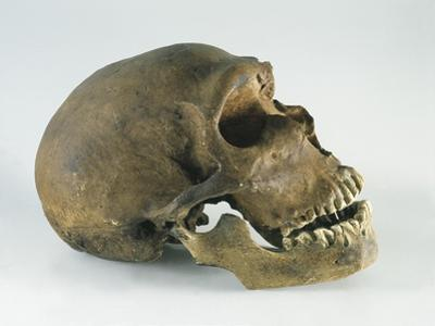 Neanderthal Man Skull