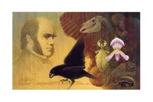 A Painting of Darwin and the Variety of Life That Intrigued Him by Ned M. Seidler
