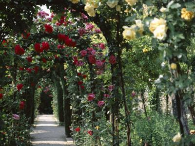 Arches Covered with Roses, Generalife Gardens, Alhambra, Granada
