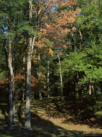 Woods in Autumn, Hudson Valley, New York State, USA