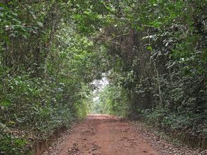 Track through dense tropical rainforest, Bobiri Butterfly Reserve, Ashanti Region, Ghana by Neil Bowman