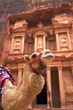Camel in Front of the Treasury, Petra, Jordan, Middle East