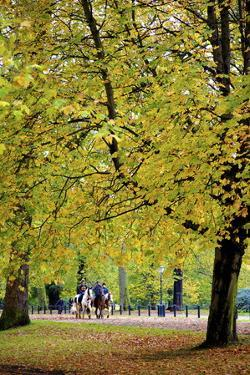 Horses in an Autumnal Hyde Park, London, England, United Kingdom, Europe by Neil Farrin