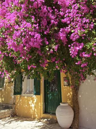 House Covered in Bougainvillea, Paxos, the Ionian Islands, Greek Islands, Greece, Europe by Neil Farrin
