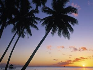 Pam Tree and Beach at Sunset, Tahiti, French Polynesia by Neil Farrin