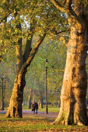Walking in an Autumnal Hyde Park, London, England, United Kingdom, Europe by Neil Farrin