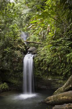 A Small Waterfall in El Yunque National Forest, Puerto Rico by Neil Losin