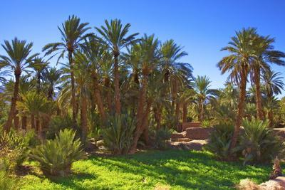 Oasis at Tamnougalt, Morocco, North Africa, Africa