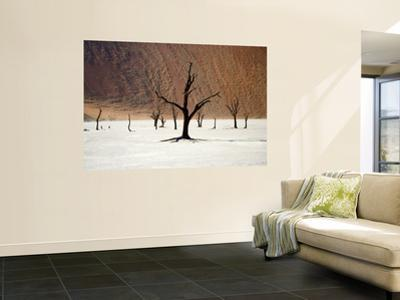 Bare Trees in Salt Plain with Sheer Hills Behind