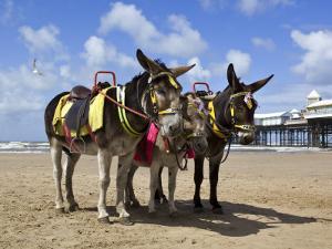 Donkey Rides on Blackpool Beach by Neil Setchfield