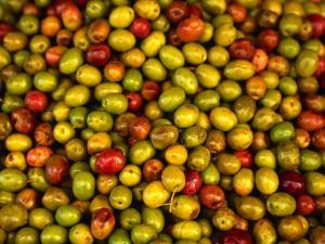 Olives from a Stall in the Central Market, Athens, Athens, Attica, Greece by Neil Setchfield