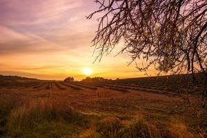 Autumn Lavender Field on Sunset by NejroN Photo