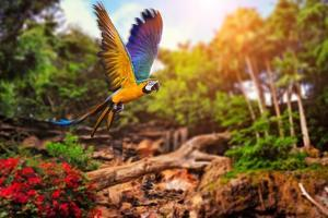 Beautiful Ara Parrot on Tropical Forest Background by NejroN Photo
