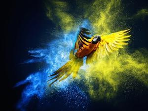 Flying Ara Parrot over Colourful Powder Explosion by NejroN Photo