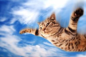Flying Funny Kitten by NejroN Photo