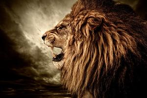 Roaring Lion Against Stormy Sky by NejroN Photo