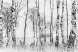 Black and White by Nel Talen