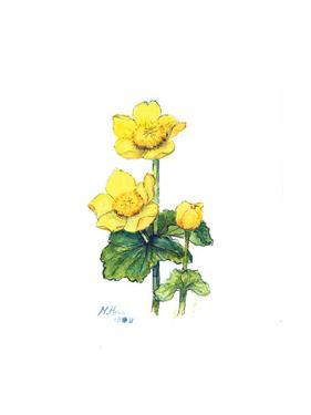 Marsh Marigold, 1998 by Nell Hill