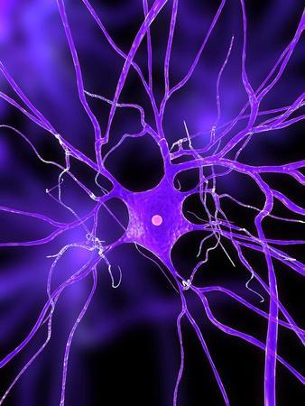 https://imgc.allpostersimages.com/img/posters/nerve-cell-artwork_u-L-PMPOUE0.jpg?p=0