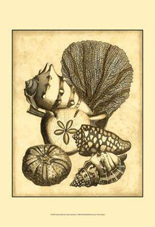 https://imgc.allpostersimages.com/img/posters/neutral-shell-and-coral-collection-i_u-L-F18H0W0.jpg?artPerspective=n