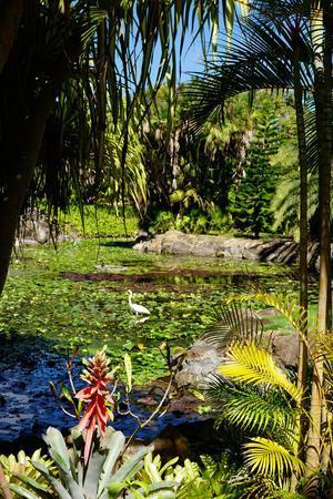 https://imgc.allpostersimages.com/img/posters/nevis-botanical-garden-nevis-st-kitts-and-nevis_u-L-PWFMKU0.jpg?artPerspective=n