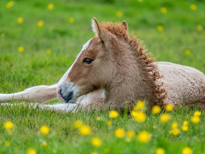 https://imgc.allpostersimages.com/img/posters/new-born-foal-iceland_u-L-PZS46Y0.jpg?artPerspective=n