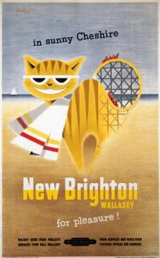 New Brighton Cat