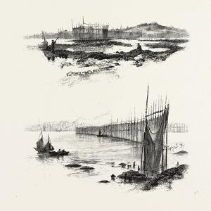 New Brunswick, Salmon Weirs, St. John Harbour, Canada, Nineteenth Century