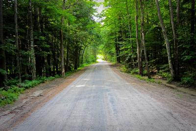 New England Road Photo Print Poster