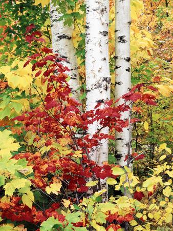 https://imgc.allpostersimages.com/img/posters/new-york-adirondack-mts-the-fall-colors-of-trees_u-L-PXRSWJ0.jpg?p=0