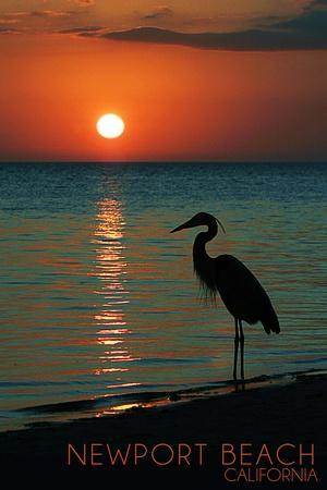 https://imgc.allpostersimages.com/img/posters/newport-california-heron-and-sunset_u-L-Q1GQNXQ0.jpg?p=0