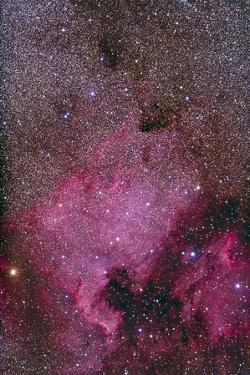 Ngc 7000 and the Pelican Nebula