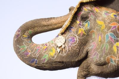 Colorful Elephant , Festival , Jaipur, Rajasthan, India by NH7