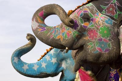 Colorful Elephants , Festival , Jaipur, Rajasthan, India by NH7