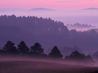 Scots Pine Forest in Dawn Mist Abernethy, Speyside, Scotland, UK