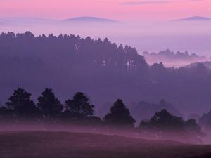 Scots Pine Forest in Dawn Mist Abernethy, Speyside, Scotland, UK by Niall Benvie