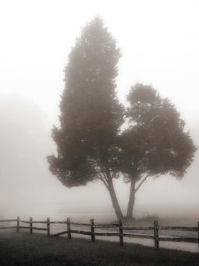 Cedar Tree and Fence by Nicholas Bell